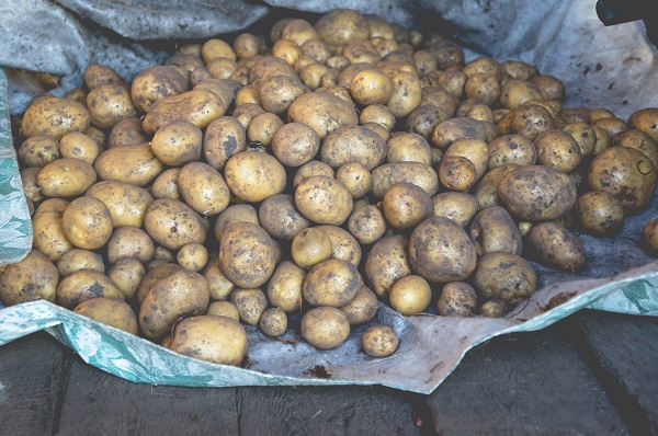 pile of dirt-covered Yukon gold potatoes